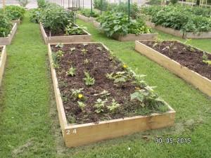 Community Garden June 2015-2