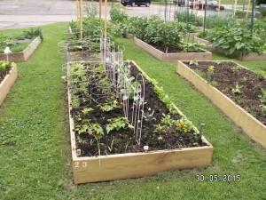 Community Garden June 2015-3