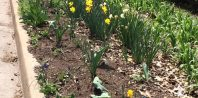 Wabash Garden
